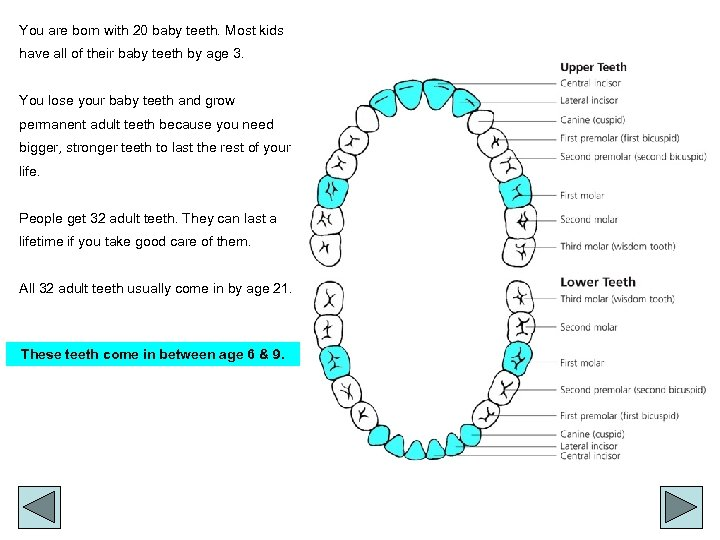 You are born with 20 baby teeth. Most kids have all of their baby