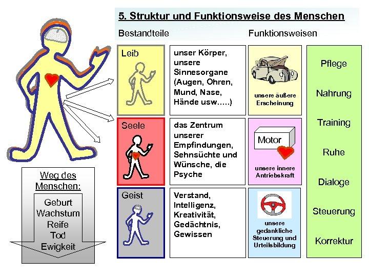 5. Struktur und Funktionsweise des Menschen Bestandteile Leib Seele Weg des Menschen: Geburt Wachstum