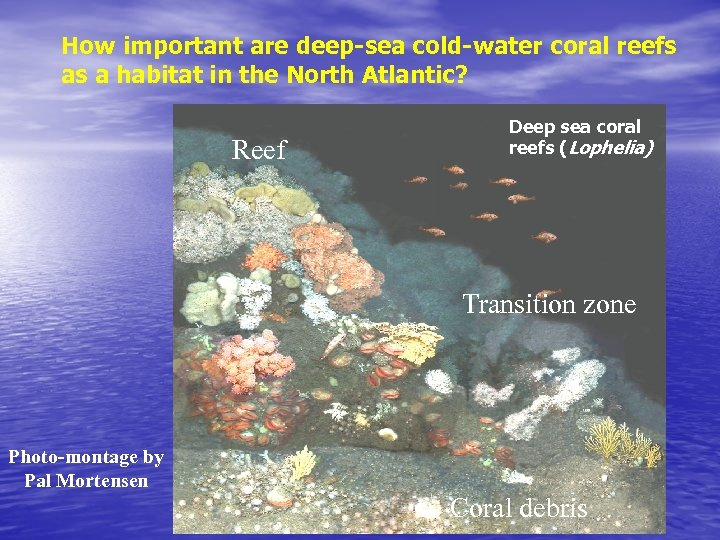 How important are deep-sea cold-water coral reefs as a habitat in the North Atlantic?