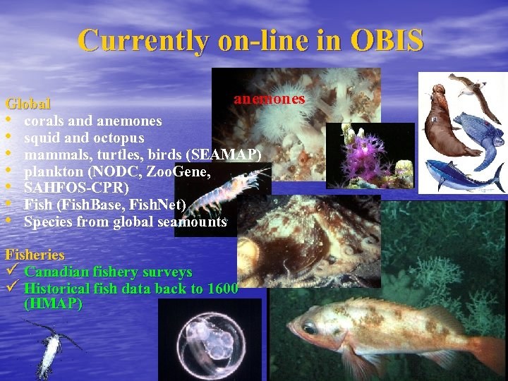 Currently on-line in OBIS anemones Global • corals and anemones • squid and octopus