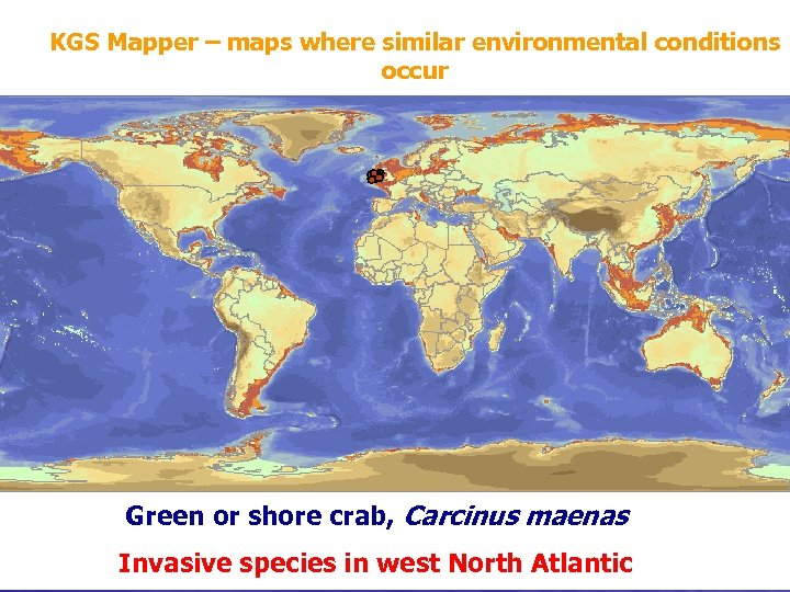 KGS Mapper – maps where similar environmental conditions occur Green or shore crab, Carcinus