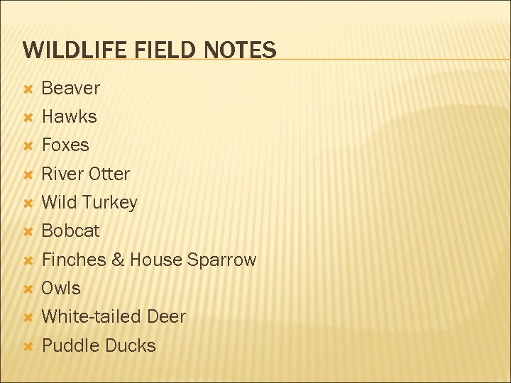 WILDLIFE FIELD NOTES Beaver Hawks Foxes River Otter Wild Turkey Bobcat Finches & House