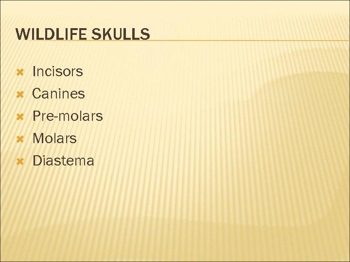 WILDLIFE SKULLS Incisors Canines Pre-molars Molars Diastema