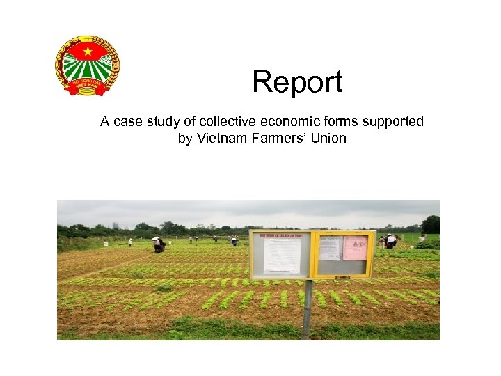 Report A case study of collective economic forms supported by Vietnam Farmers' Union