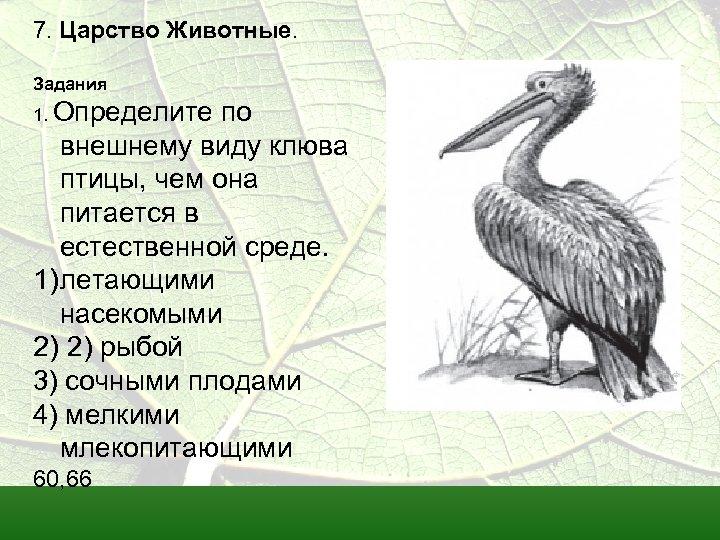 7. Царство Животные. Задания 1. Определите по внешнему виду клюва птицы, чем она питается
