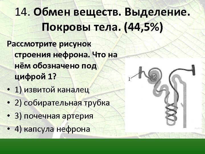 14. Обмен веществ. Выделение. Покровы тела. (44, 5%) Рассмотрите рисунок строения нефрона. Что на