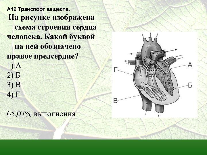 А 12 Транспорт веществ. На рисунке изображена схема строения сердца человека. Какой буквой на
