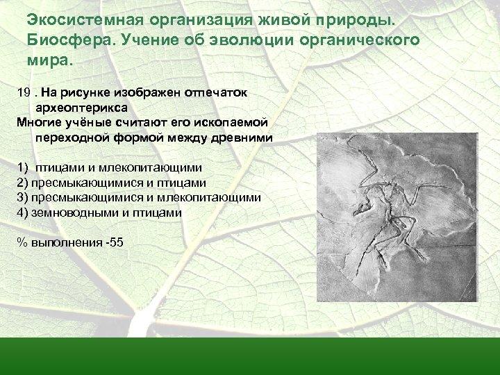 Экосистемная организация живой природы. Биосфера. Учение об эволюции органического мира. 19. На рисунке изображен