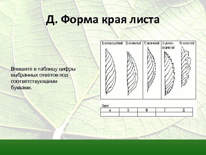 Д. Форма края листа Впишите в таблицу цифры выбранных ответов под соответствующими буквами.