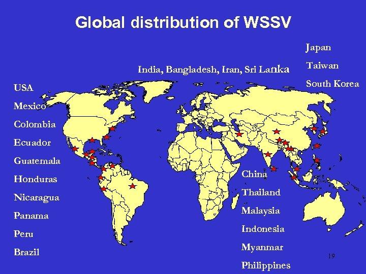 Global distribution of WSSV Japan India, Bangladesh, Iran, Sri Lanka Taiwan South Korea USA