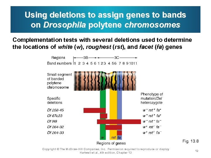 Using deletions to assign genes to bands on Drosophila polytene chromosomes Complementation tests with