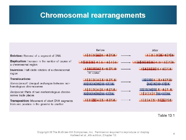 Chromosomal rearrangements Table 13. 1 Copyright © The Mc. Graw-Hill Companies, Inc. Permission required