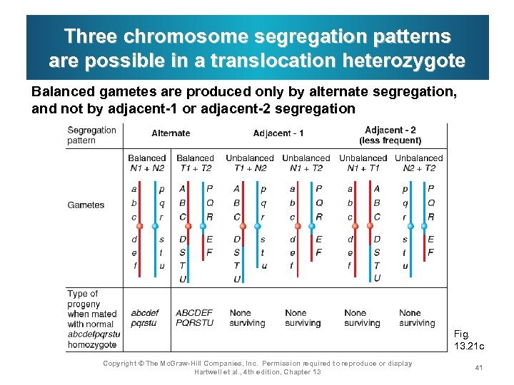 Three chromosome segregation patterns are possible in a translocation heterozygote Balanced gametes are produced