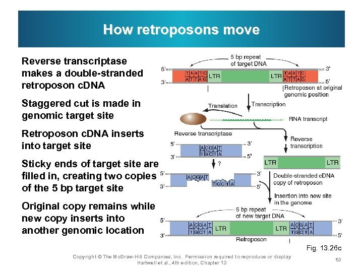 How retroposons move Reverse transcriptase makes a double-stranded retroposon c. DNA Staggered cut is