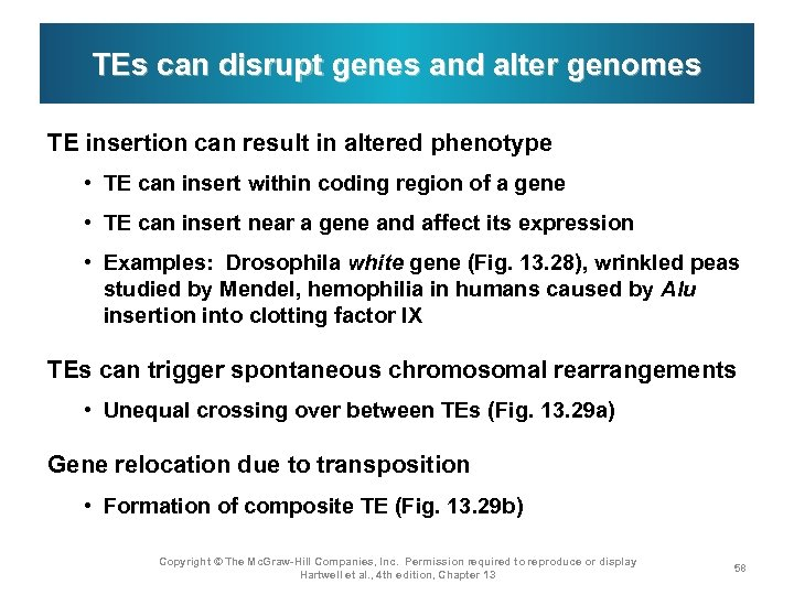 TEs can disrupt genes and alter genomes TE insertion can result in altered phenotype