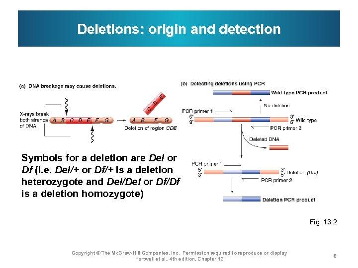 Deletions: origin and detection Symbols for a deletion are Del or Df (i. e.