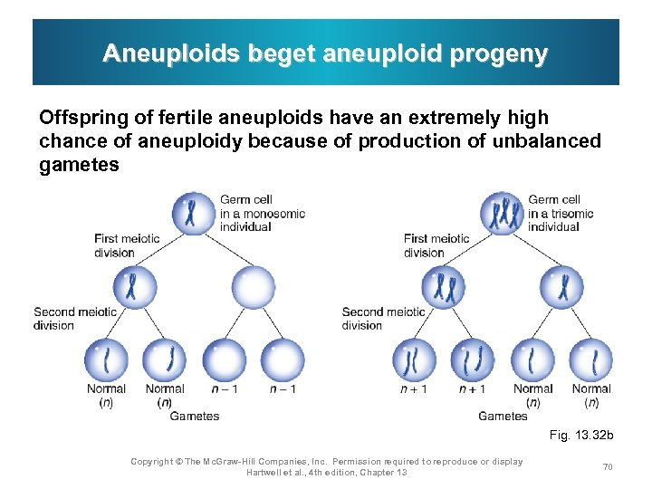 Aneuploids beget aneuploid progeny Offspring of fertile aneuploids have an extremely high chance of