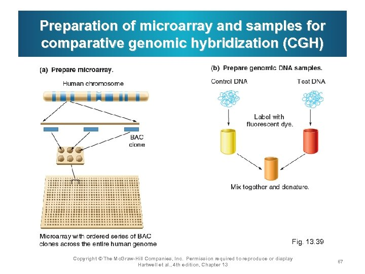 Preparation of microarray and samples for comparative genomic hybridization (CGH) Fig. 13. 39 Copyright