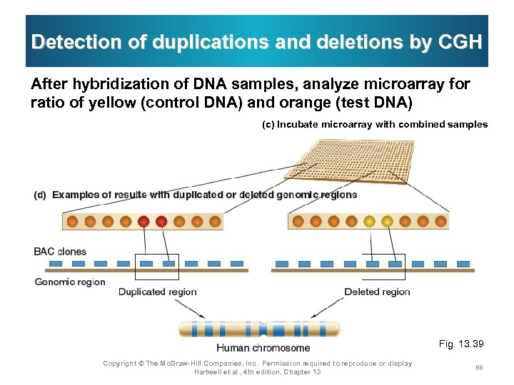 Detection of duplications and deletions by CGH After hybridization of DNA samples, analyze microarray