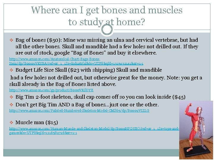 Where can I get bones and muscles to study at home? v Bag of
