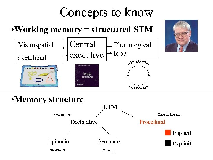 Concepts to know • Working memory = structured STM Central executive Visuospatial sketchpad •