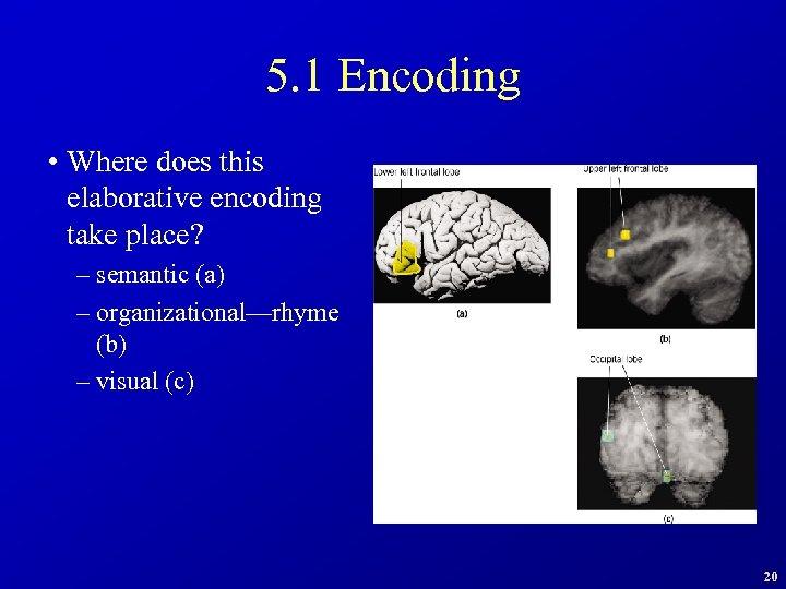 5. 1 Encoding • Where does this elaborative encoding take place? – semantic (a)