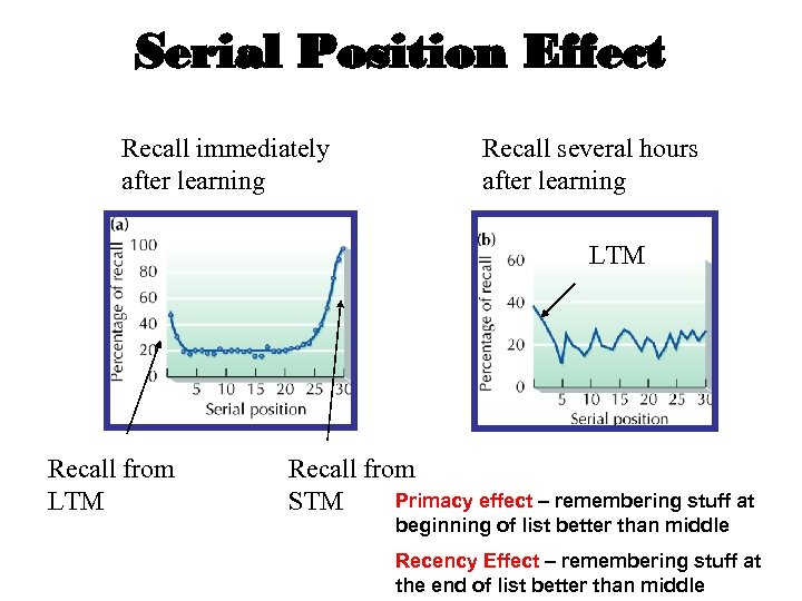 Serial Position Effect Recall immediately after learning Recall several hours after learning LTM Recall