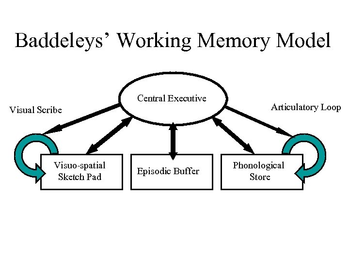 Baddeleys' Working Memory Model Central Executive Visual Scribe Visuo-spatial Sketch Pad Episodic Buffer Articulatory