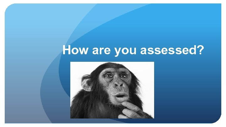 How are you assessed?