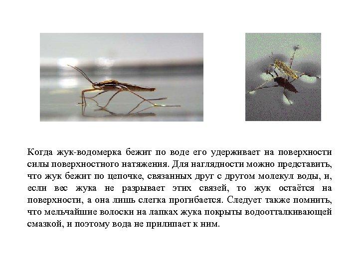 Когда жук-водомерка бежит по воде его удерживает на поверхности силы поверхностного натяжения. Для наглядности