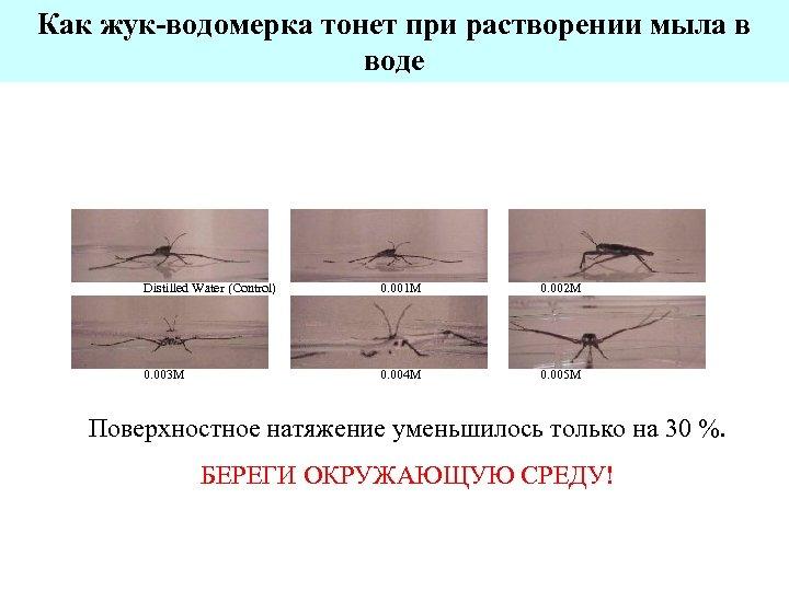 Как жук-водомерка тонет при растворении мыла в воде Distilled Water (Control) 0. 003 M