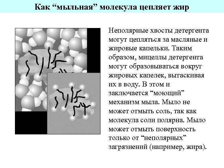 """Как """"мыльная"""" молекула цепляет жир Неполярные хвосты детергента могут цепляться за масляные и жировые"""