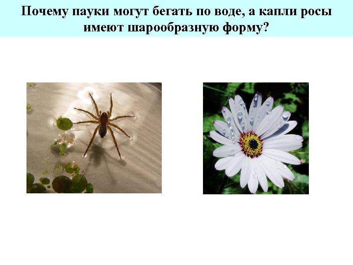 Почему пауки могут бегать по воде, а капли росы имеют шарообразную форму?