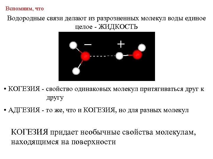 Вспомним, что Водородные связи делают из разрозненных молекул воды единое целое - ЖИДКОСТЬ •