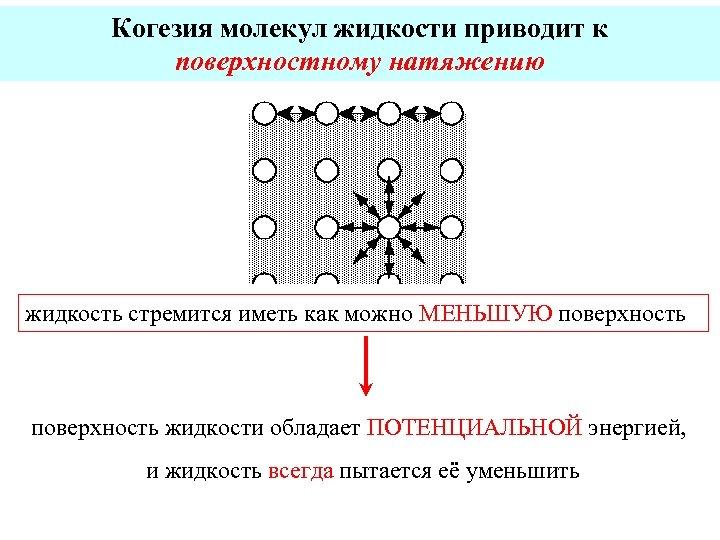 Когезия молекул жидкости приводит к поверхностному натяжению жидкость стремится иметь как можно МЕНЬШУЮ поверхность