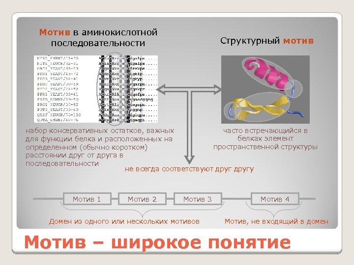 Мотив в аминокислотной последовательности Структурный мотив часто встречающийся в набор консервативных остатков, важных белках