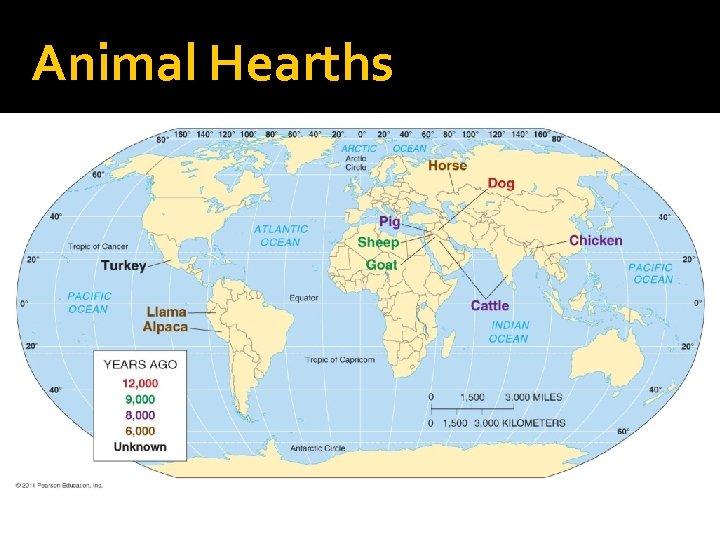 Animal Hearths