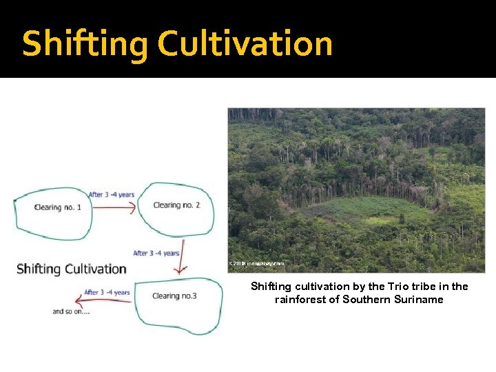 Shifting Cultivation Shifting cultivation by the Trio tribe in the rainforest of Southern Suriname
