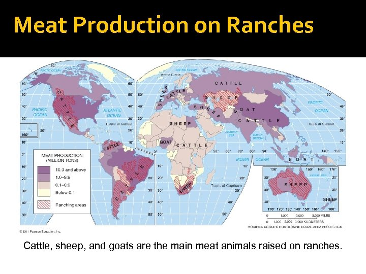 Meat Production on Ranches Cattle, sheep, and goats are the main meat animals raised