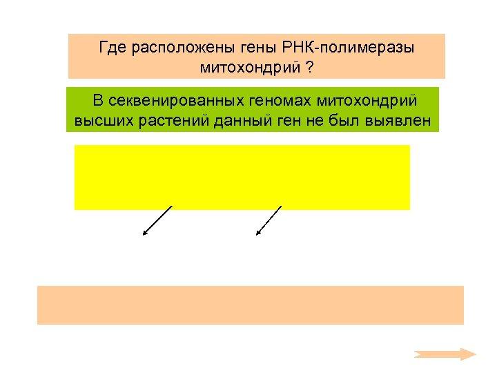 Где расположены гены РНК-полимеразы митохондрий ? В секвенированных геномах митохондрий высших растений данный ген