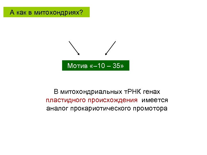 А как в митохондриях? Мотив «– 10 – 35» В митохондриальных т. РНК генах