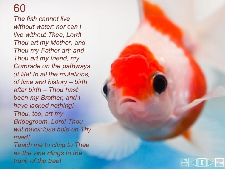 60 The fish cannot live without water: nor can I live without Thee, Lord!