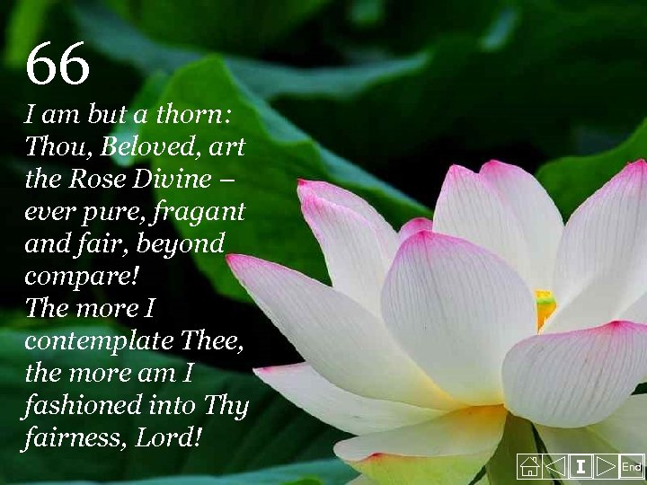 66 I am but a thorn: Thou, Beloved, art the Rose Divine – ever