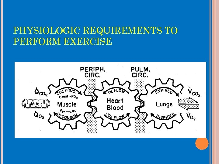 PHYSIOLOGIC REQUIREMENTS TO PERFORM EXERCISE