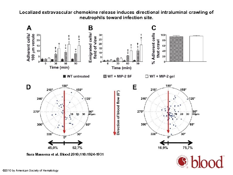 Localized extravascular chemokine release induces directional intraluminal crawling of neutrophils toward infection site. Sara