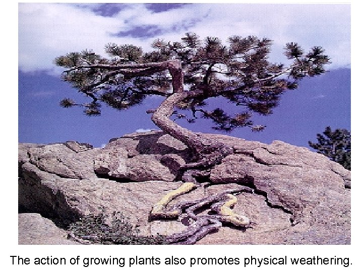 The action of growing plants also promotes physical weathering.