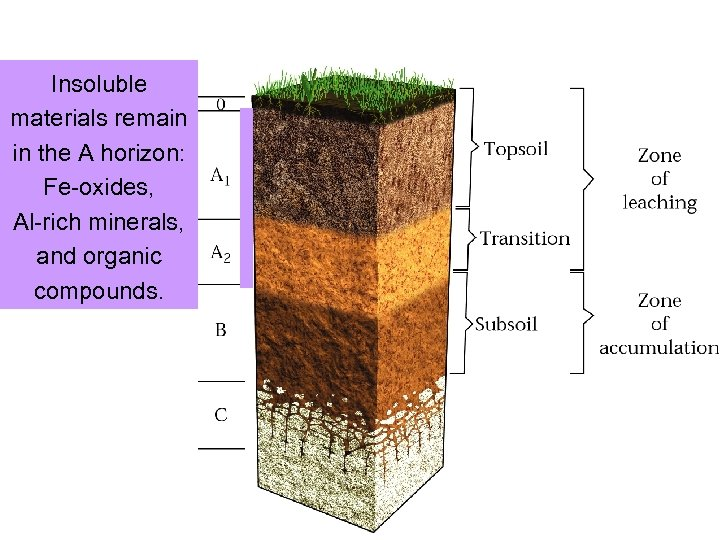Insoluble materials remain in the A horizon: Fe-oxides, Al-rich minerals, and organic compounds.