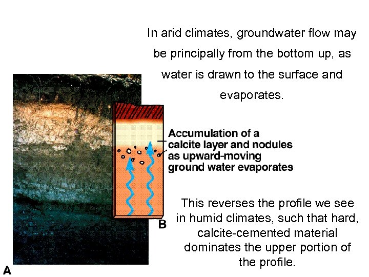 In arid climates, groundwater flow may be principally from the bottom up, as water