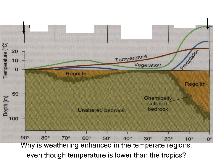 Why is weathering enhanced in the temperate regions, even though temperature is lower than
