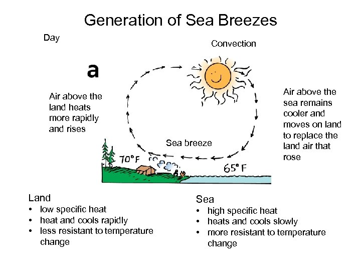 Generation of Sea Breezes Day Convection Air above the land heats more rapidly and